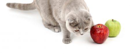 Kunnen we salvestrol gebruiken bij dieren?